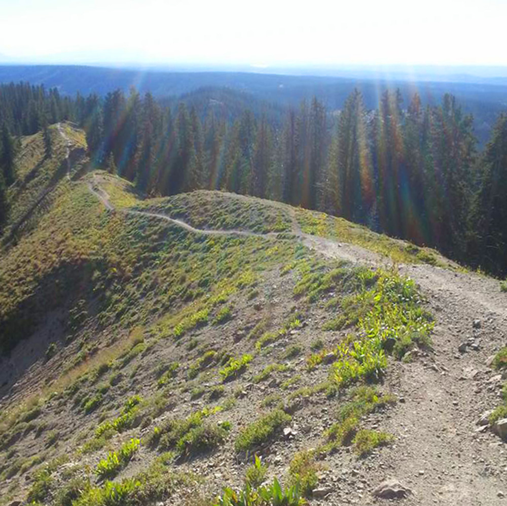 Calico Trail in Rico, Colorado offers amazing alpine mountain biking.