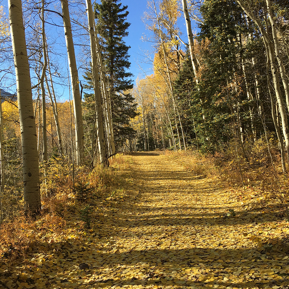 Deadwood road covered in fall colors in Rico, Colorado